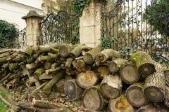 Peça da cerca com as árvores cuted no parque Imagem de Stock Royalty Free