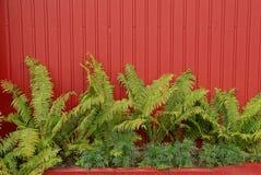 Peça de uma cerca vermelha com folhas verdes de uma samambaia e de umas plantas decorativas imagens de stock