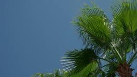 Peça de uma palmeira contra um céu azul durante o dia 4K video estoque