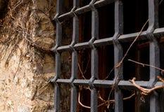 A peça velha da parede de pedra do preto da grade do ferro da citadela entrelaçou-se com a videira seca das uvas selvagens fotos de stock