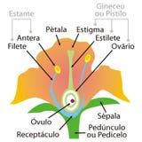 Peças da flor ilustração royalty free