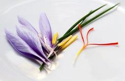 Peças da flor do aç6frão Imagem de Stock Royalty Free