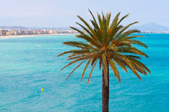 Peñiscola. Palm tree against a beautiful sea coast background Royalty Free Stock Photo
