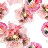Peônia com teste padrão sem emenda da papoila e do ranúnculo, fundo floral clássico da repetição para a Web e cópia Mão da aquare imagens de stock