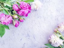 Pe?nia elegante da flor do projeto fresco bonito da celebra??o do ramalhete da flor no fundo concreto cinzento fotografia de stock