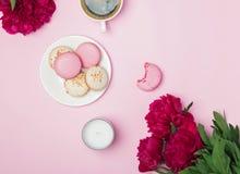 Peônias cor-de-rosa e macarins franceses no fundo do rosa pastel Fotos de Stock Royalty Free