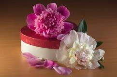 Peônias e uma caixa que encontra-se na tabela de madeira brilhante Imagens de Stock Royalty Free
