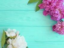Peônias frescas da flor bonita em um fundo de madeira azul, quadro do verão imagem de stock royalty free