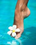Pełen wdzięku kobiety noga Fotografia Royalty Free
