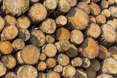 Tarcicy drewno Zdjęcia Stock
