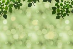 pełna rama zielony ulistnienie na gałąź Zdjęcia Stock