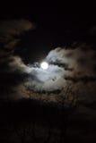 Pełna Wilcza księżyc Obraz Stock