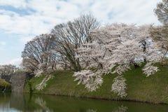 Pełnego kwiatu okwitnięcia drzewa wzdłuż Kajo roszują fosy Obraz Stock