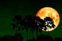 pełnej krwi księżyc plecy nad sylwetek wysokimi palmami w nocnym niebie obrazy royalty free