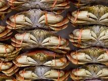 Pełni kraby na Lodowym sprzedawaniu przy rynkiem obrazy stock