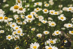 Pełnia lata Sweden na słonecznym dniu Zdjęcie Stock
