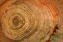 pełnoletni tło okrąża drewnianego fotografia royalty free