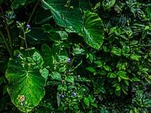 Pełny Hd liścia tło Obraz Royalty Free
