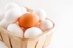 Pełny kosz świezi jajka na białym tle zdjęcie stock