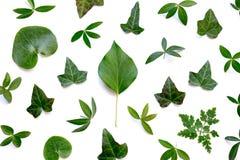 Pełny rama wzór Z zieleń liśćmi Na Białym tle Zdjęcia Stock