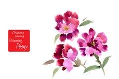 Peônia, pintada no guache Fotos de Stock Royalty Free