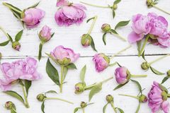 Pe?nias cor-de-rosa fotografia de stock