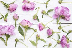 Pe?nias cor-de-rosa imagens de stock