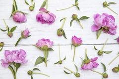 Pe?nias cor-de-rosa imagem de stock royalty free