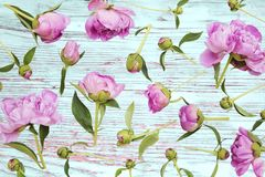 Pe?nias cor-de-rosa fotografia de stock royalty free