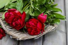 Peônias vermelhas na cesta cinzenta Imagem de Stock Royalty Free