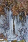 pełnoletni lód Obrazy Royalty Free