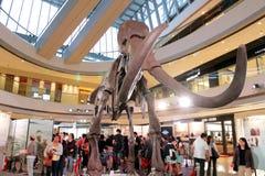 pełnoletniej dziecka wystawy h lodowy k mamut Zdjęcie Royalty Free