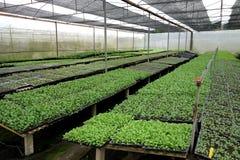 Pełny Handlowy rolnictwo cienia dom obrazy royalty free