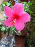 pełny HD kwiat fotografia stock