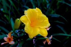 pełny kwiat Zdjęcia Stock