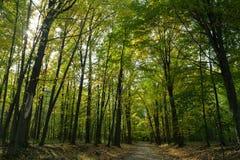 Pełny las Zdjęcie Royalty Free