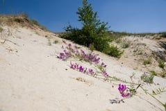pełzacza piasek Zdjęcia Royalty Free