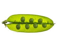 Pea. Closeup of a pea pod Stock Photos