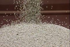 Pea Crop Harvest immagine stock