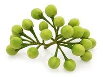 Pea Eggplants Lizenzfreie Stockbilder
