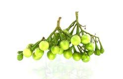 Pea Eggplants. On white background Stock Photos