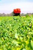 Pea Farming comercial con una máquina segadora fotografía de archivo libre de regalías