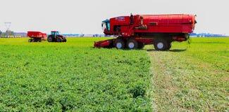 Pea Farming comercial con una máquina segadora foto de archivo