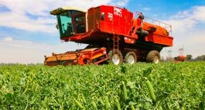 Pea Farming comercial con una máquina segadora imagen de archivo