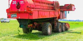 Pea Farming comercial con una máquina segadora fotos de archivo libres de regalías