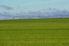 Pea Field et pulvérisateur d'irrigation Images libres de droits
