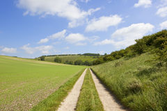 Pea field and farm track Stock Images