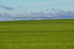 Pea Field and Irrigation Sprayer Royalty Free Stock Images