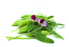 Pea flower. Pea pods and flower isolated on white Royalty Free Stock Image