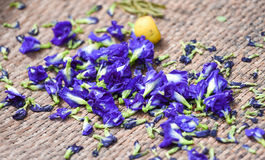 Pea flowers. Blue Butterfly Pea Flowers for Herbal Shampoo, fresh violet crake flowers or butterfly pea flowers background , They can dried to make healthy cups Stock Photography